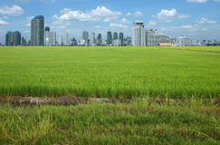 Rice field buildings Royalty Free Stock Photography