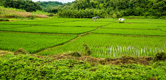 Rice field, Chiang Mai Royalty Free Stock Photos