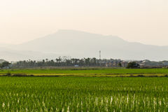 Rice field in Chiangmai , Northen Thailand Stock Photos