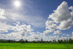 Rice field and cloud Stock Photos