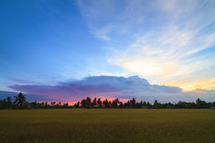 Rice field and clouds in evening time , Thailand Royalty Free Stock Images