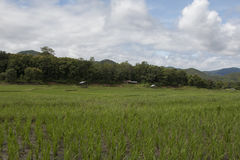 Rice field clouds Royalty Free Stock Images
