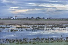 Rice field with a cottage in Albufera of Valencia at sunset royalty free stock photos