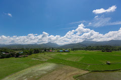 Rice field countryside. With cumurus clouds and mountain view Stock Photo