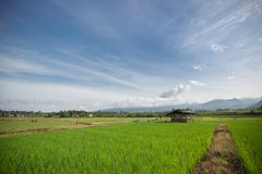 Rice field countryside. A hut in the rice field countryside Stock Photos