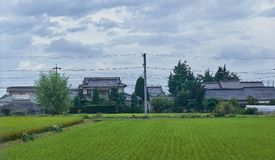 Rice field in countryside in Japan, 08 26 2018. Rice field in countryside in Matsumoto city, Nagano prefecture, Japan, 08 26 2018 Stock Photo