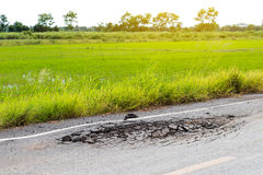 Rice field with cracked road. Royalty Free Stock Photos