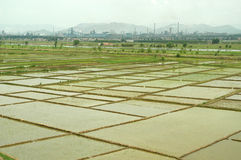 Rice field with factories royalty free stock photos