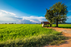 In the rice field Royalty Free Stock Images