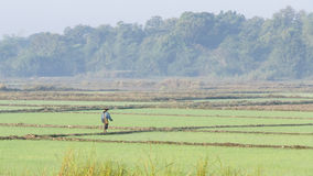 In a rice field Stock Image