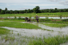 Rice Field. Farmers are preparing to plow rice Stock Photos