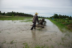 Rice Field. Farmers are preparing to plow rice Royalty Free Stock Photography