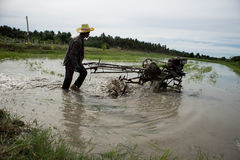 Rice Field. Farmers are preparing to plow rice Royalty Free Stock Photo