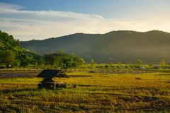 Rice field and farming in Chiang Mai province Royalty Free Stock Photos