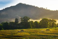 Rice field and farming in Chiang Mai province Royalty Free Stock Image