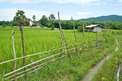 Rice field with fence. Cottage, sugar palm and temple Royalty Free Stock Photos