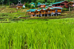 The rice field in fornt of home stay Stock Photos