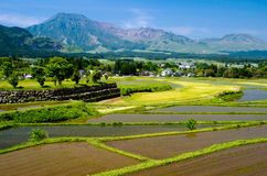 Rice field in front of mountains royalty free stock photos
