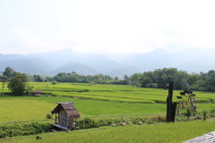 Rice field in the North of Thailand. We go travel in north of Thailand Royalty Free Stock Photos