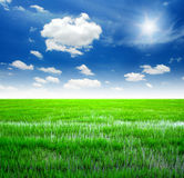 Rice field green grass. Blue sky cloud cloudy landscape background royalty free stock photo