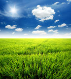 Rice field green grass. Blue sky cloud cloudy landscape background royalty free stock images