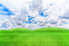 Rice field green grass and blue sky  landscape background Stock Images