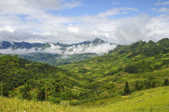 Rice field in Ha Giang Royalty Free Stock Photo