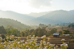 Rice field after harvest. With farmhouse on mountain background Royalty Free Stock Photography