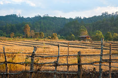 Rice field after harvest. With farmhouse on mountain background Stock Images