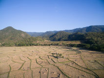 Rice field after harvests season by aerial view from drone Royalty Free Stock Image