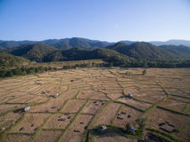 Rice field after harvests season from aerial view Stock Photos