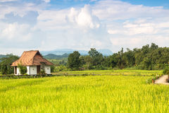 Rice field with house Royalty Free Stock Images