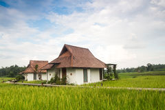 Rice field with house Stock Photo