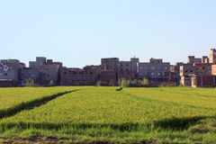 Rice field with houses in background. Damietta ,north Egypt Stock Images