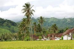 Rice-field houses and mountains Stock Photos