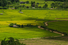 Rice field and hut. In Chiangmai at Northern of Thailand Royalty Free Stock Photos