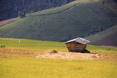 Rice field Hut Royalty Free Stock Images
