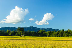 Rice  field. Huts in rice field at northern of Thailand Royalty Free Stock Photography