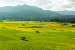 Rice  field. Huts in rice field at northern of Thailand Stock Image