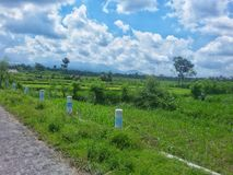 Rice field Indonesia stock photos
