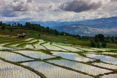 Rice field Ladder Stock Image