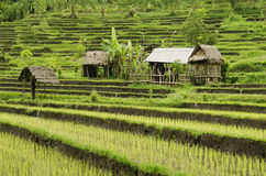Rice field landcape in bali indonesia Royalty Free Stock Images