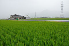 Rice-field landscape. Rural landscape with rice field, farmhouse, and mountain silhouette on the backward stock photo