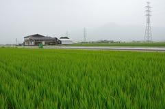 Rice-field landscape Stock Photo