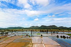Rice field landscape. Natural view in Thailand and Asia royalty free stock photography