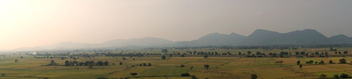 Rice field landscape in panorama Stock Photography