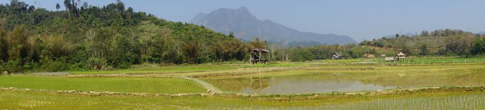Rice field, Laos, Asia. Rice field, Laos, South East Asia Royalty Free Stock Images