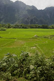 Rice field in Laos, Vang Vieng Stock Images
