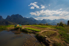 Rice field in Laotian mountains Stock Image