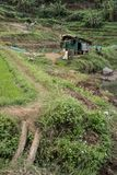 Rice field and little hut in Vietnam. royalty free stock photo